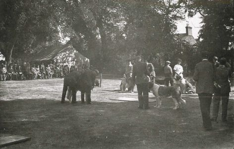 Elephant at the Sandy Show c1920s
