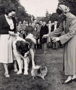 Dog Show Sandy Show c 1950s